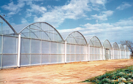 Superstar Series 3500 Greenhouse